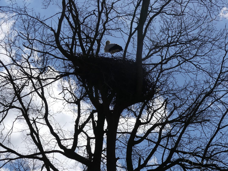 chasse aux œufs parc des oiseaux