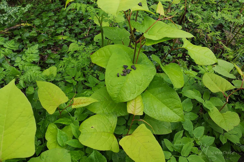 jouer avec la nature feuilles