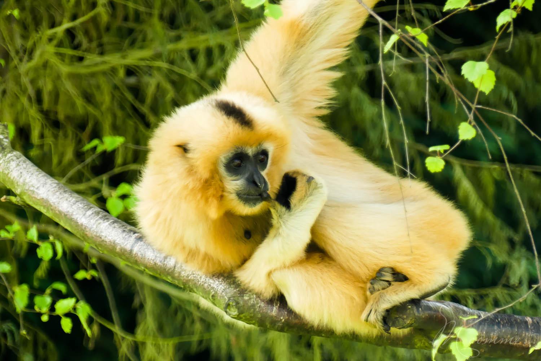singe zoo la biossiere du dore