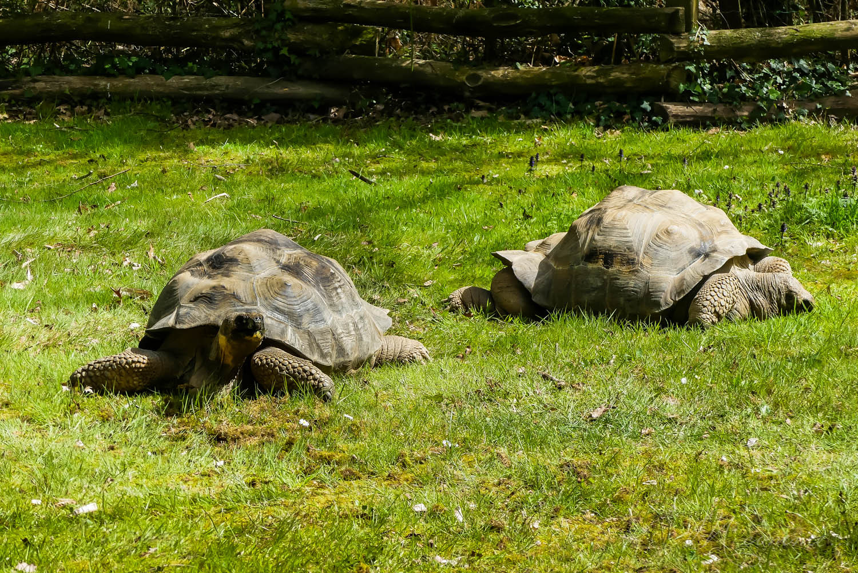 tortues géantes zoo de la boissiere du doré