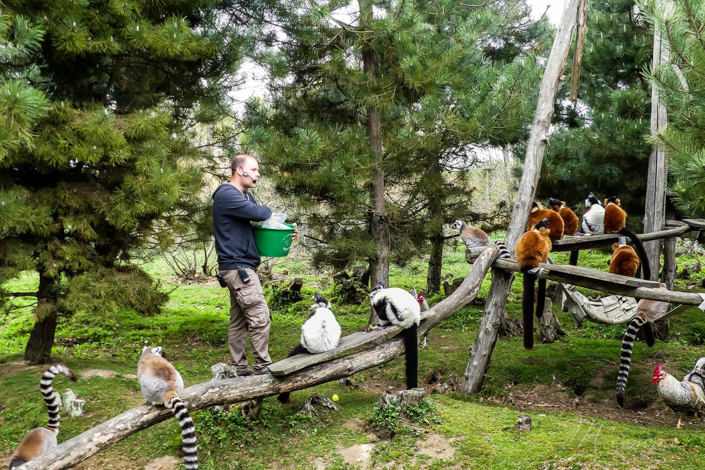 nourrissage animaux zoo la boissiere du dore
