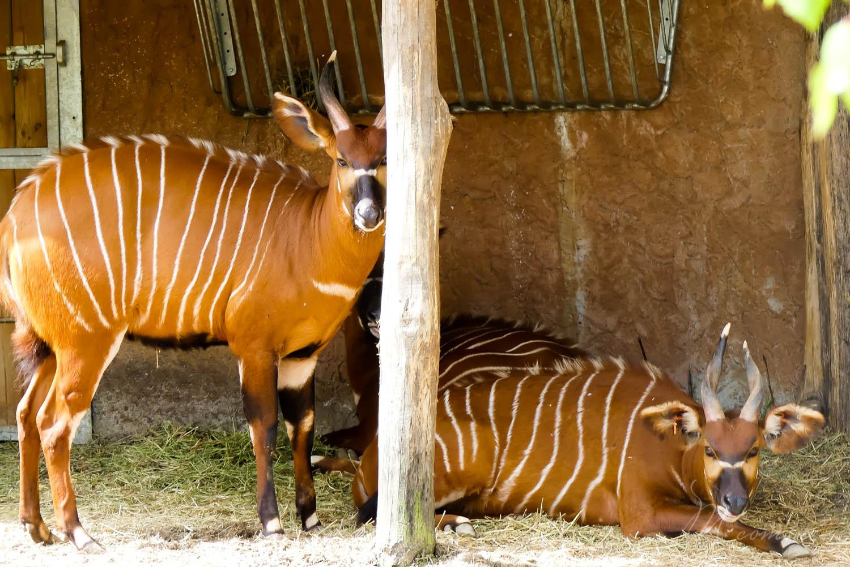 plaine africaine zoo la boissiere du dore
