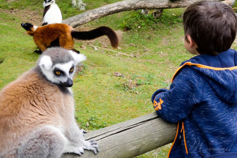 animaux semi liberte zoo la biossiere du dore