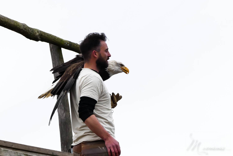 spectacle oiseaux zoo la boissiere duu dore
