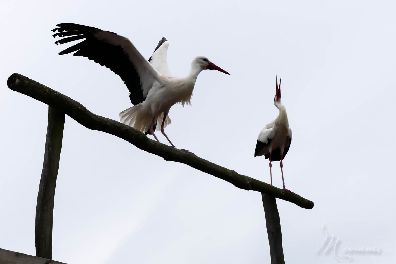 spectacle oiseaux zoo la boissiere du dore