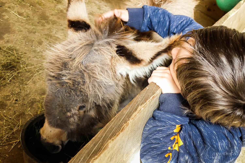 Ane mini ferme zoo la biossiere du doré