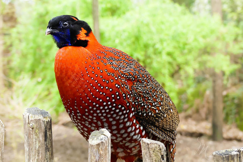 oiseaux zoo la boissiere du dore