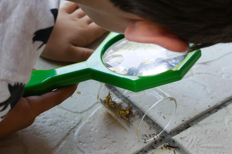 observer les insectes avec une loupe