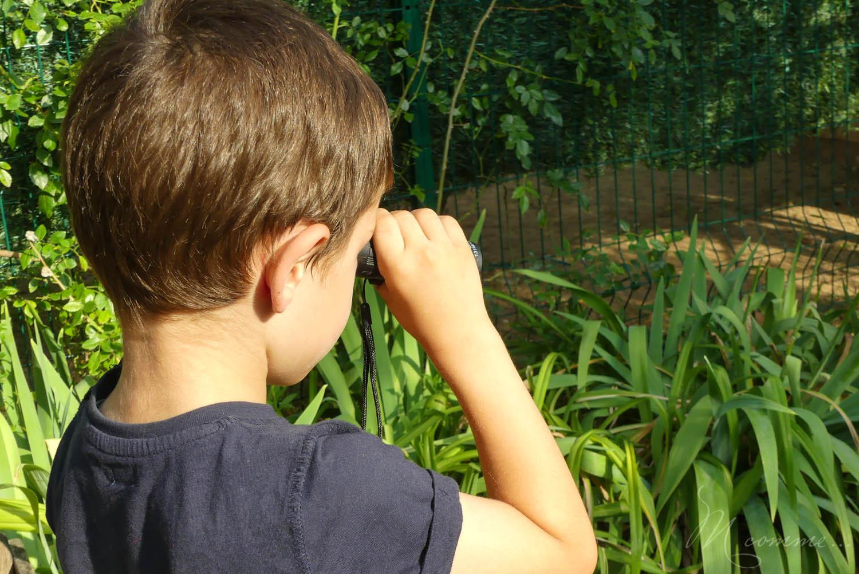 monoculaire pour observer les oiseaux