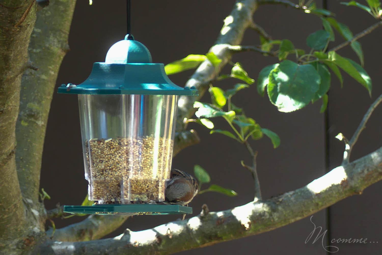mangeoire pour observer les oiseaux