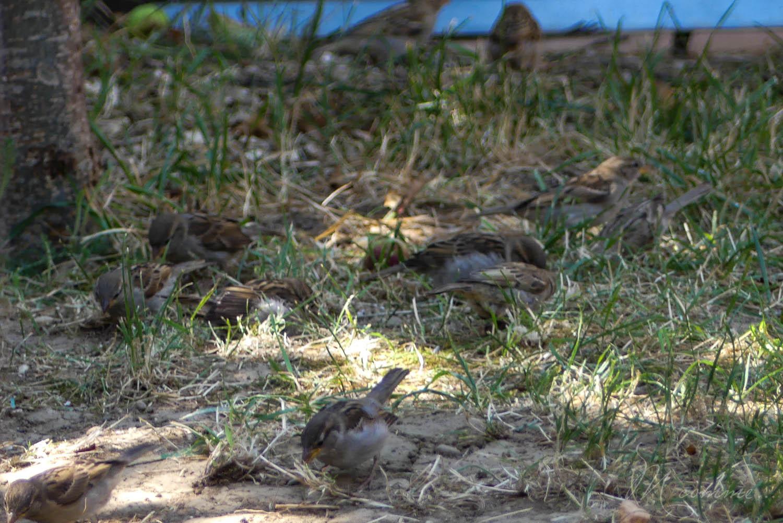 Id es pour observer les insectes et les oiseaux du jardin m comme - Faire peur aux oiseaux jardin ...