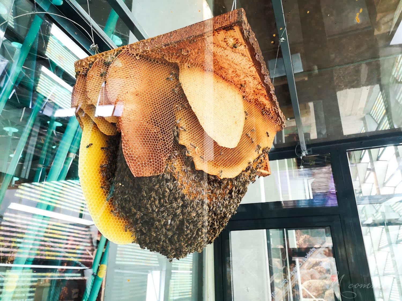 micropolis ruche abeilles