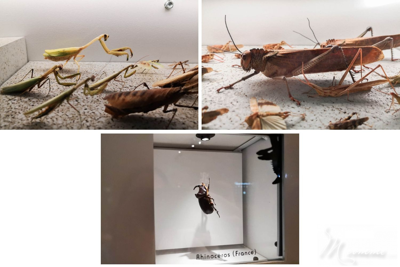 micropolis cité des insectes