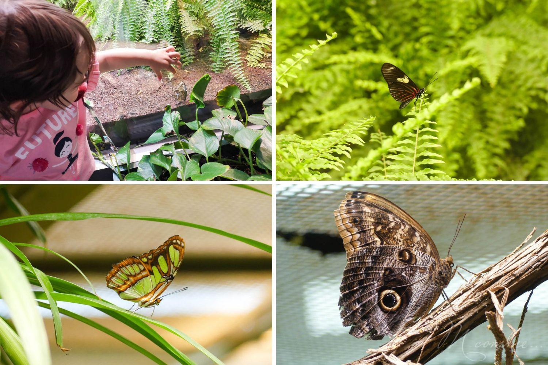 micropolis cité des insectes serre aux papillons