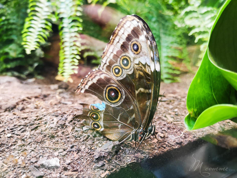 À 15 minutes de Millau, située sur le Lévézou, en Aveyron, Micropolis La Cité des Insectes est un véritable microcosme de la vie des insectes. Ce parc de loisirs offre une visite en intérieur et extérieur, pour une belle journée en famille. #micropolis #insectes #museeinsectes #aveyron #visiteraveyron #activitesenfants #sortieenfamille #vacances #weekend #vacancesenaveyron #aveyron #levezou #sortieenfantsaveyron #papillons #serreauxpapillons #avismicropolis